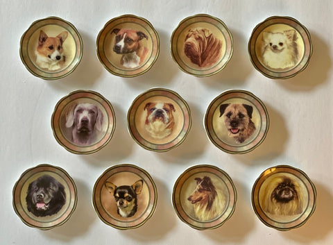 Set / Collection of 11 Antique DOG Portrait Butter Pats Staffordshire England