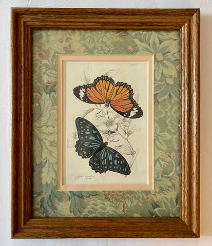 Vintage Double Matted Wood Framed Antique Botanical & Butterfly Print Plate 9