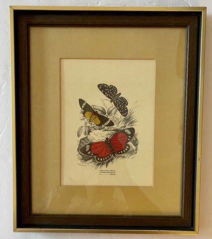 Vintage / Antique Rudolf Lesch Exotic Butterflies Litho Print in Wood Frame