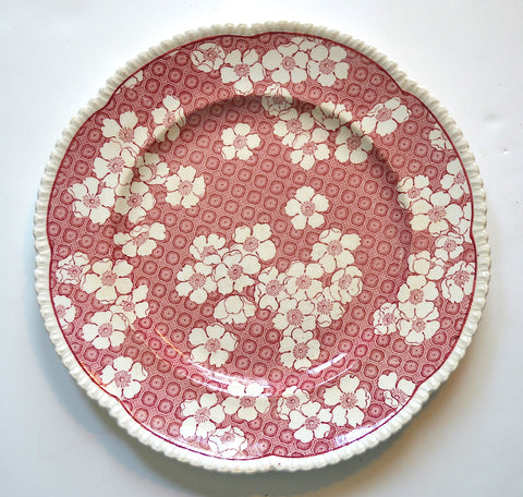 Gorgeous Royal Cauldon Red / Pink English Sheet Pattern Transferware Plate Chintz with Raised  Relief Border