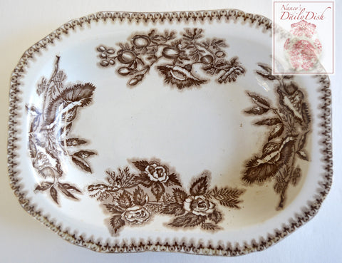 Antique Spode Copeland Aesthetic Movement Brown Transferware Serving Bowl Botanical Roses Seeds