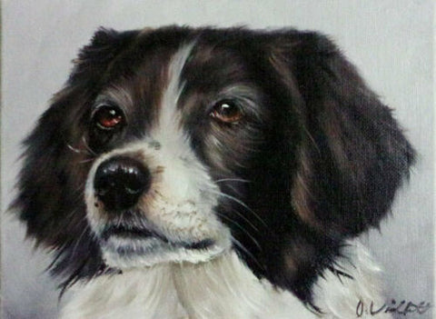 Original Hand Painted Oil Painting English Springer Spaniel Portrait Artist signed