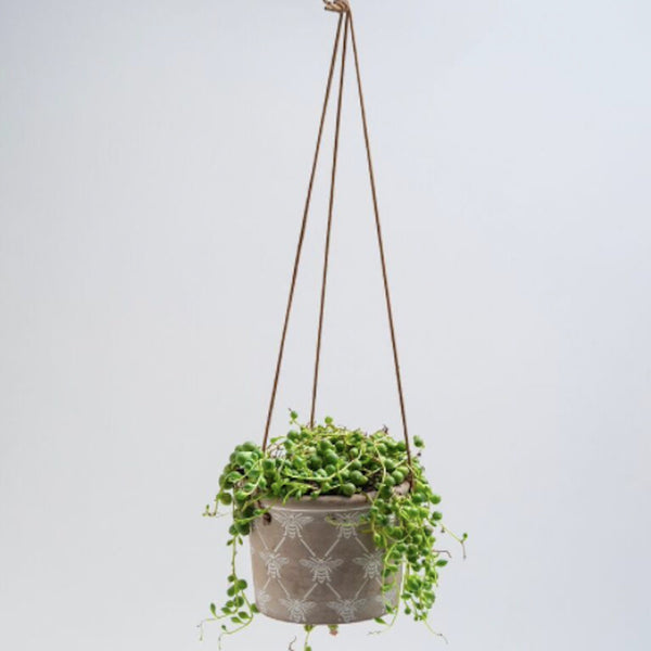 Hanging Bee Planter - Floral Affaire