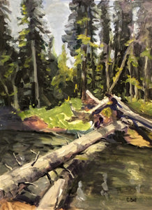 Forty Mile Creek Deadfall