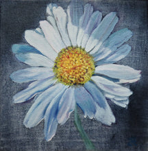Load image into Gallery viewer, Oxeye Daisy