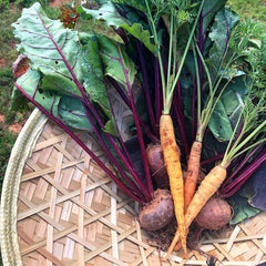 Farm fresh sustainably grown heirloom carrots and beets in North Carolina at BatCrow Farms