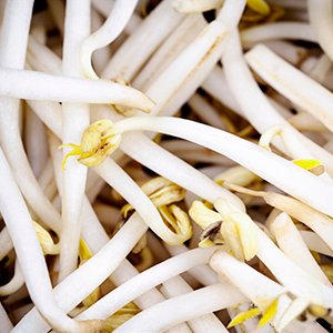Bean Sprouts (225g)