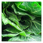 SPRING GREEN CABBAGE