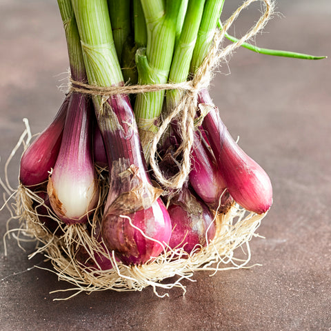 Bunched Calcot Red Onions (Bunch)