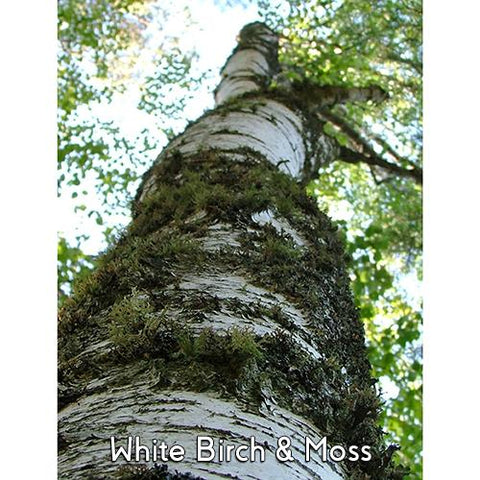 White Birch Moss 4oz 3 Layer Jar Candle