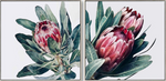 Native Protea Set of 2 Canvas