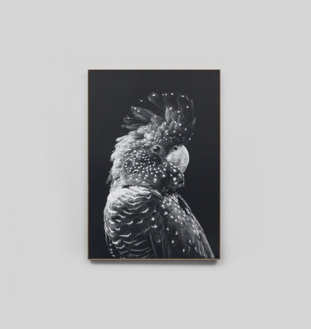 Black Cockatoo Grey Canvas