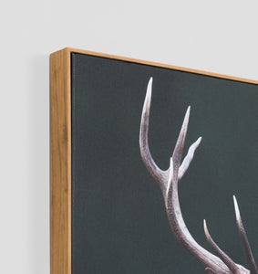 Meadow Deer Canvas