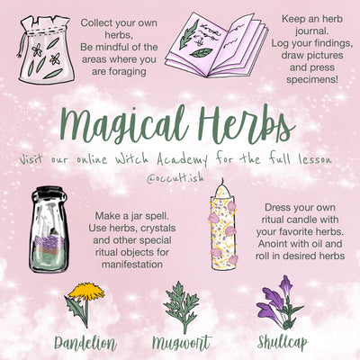 Wandering Forest Herb Guide