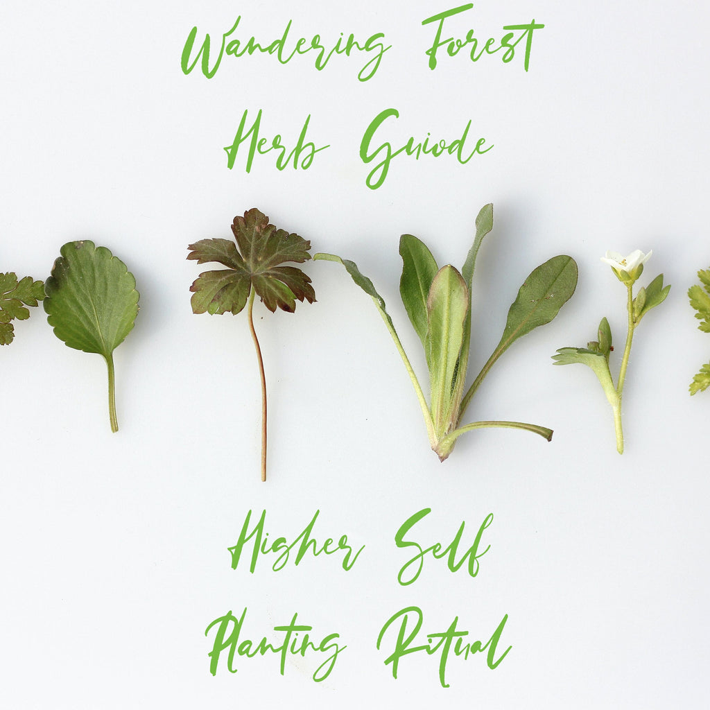 Higher Self Planting Ritual + Herb Guide