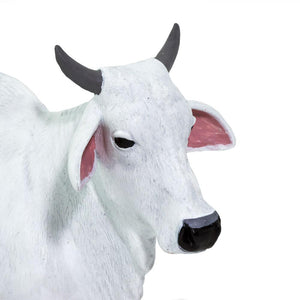 100150-Ongole Cow