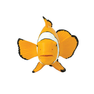 204129-Clown Anemonefish