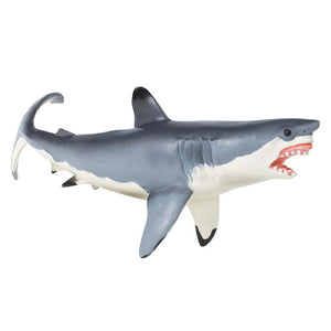 211202-Great White Shark