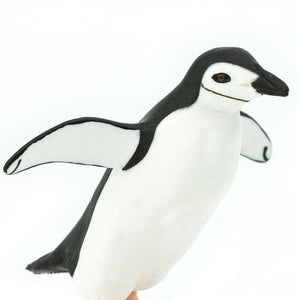 220429-Chinstrap Penguin