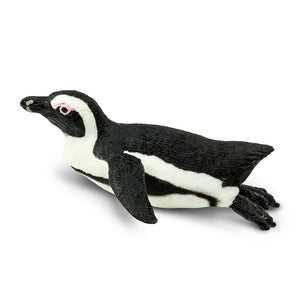 220529-South African Penguin