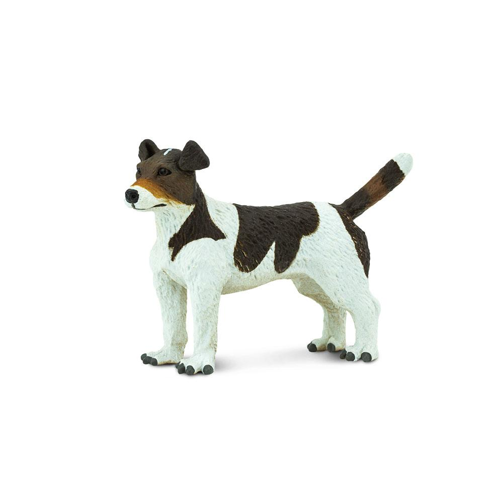 254229-Jack Russell Terrier