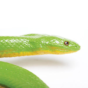 257729-Rough Green Snake