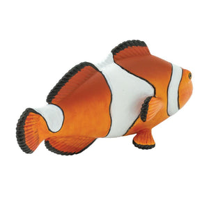 261829-Clown Anemonefish