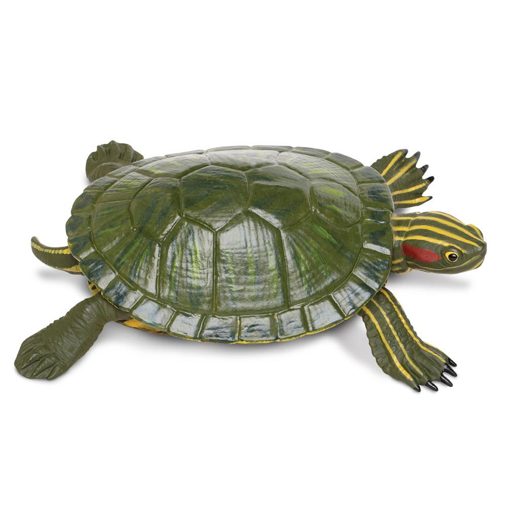 269529-Red-eared Slider Turtle