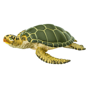 274329-Green Sea Turtle