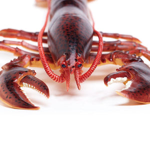 281629-Maine Lobster