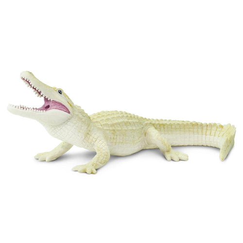 291929-White Alligator