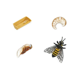 622716-Life Cycle of a Honey bee