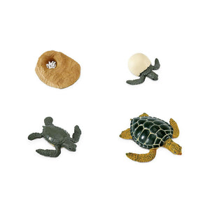 662316-Life Cycle of a Green Sea Turtle