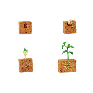 662416-Life Cycle of a Green Bean Plant