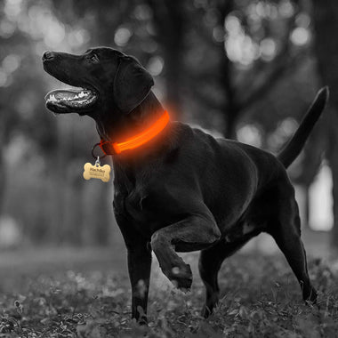 Buy Cheap Nylon LED Pet dog Collar,Night Safety Flashing Glow - Online Store Melbourne Sydney Perth Adelaide Canberra New Southwalse Australia