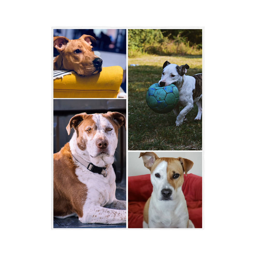 4 PHOTO Collage PET Personalized Blanket