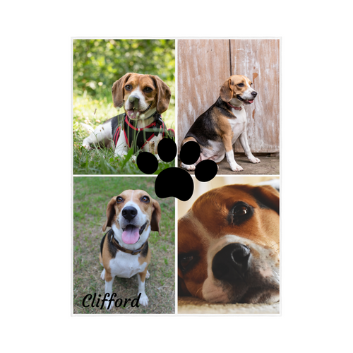 4 Photo PET Collage Blanket