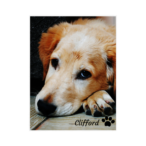 Single Image PET Blanket with PERSONALIZED NAME and Paw