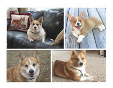 Load image into Gallery viewer, Horizontal Collage Blanket of Your pet