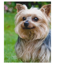 Load image into Gallery viewer, Custom Photo PET Blanket with Your pet's Photo