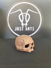 Load image into Gallery viewer, Ceramic Skull