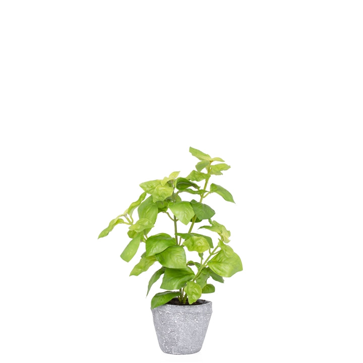 Potted 10 H Faux Green Basil Herb Plant
