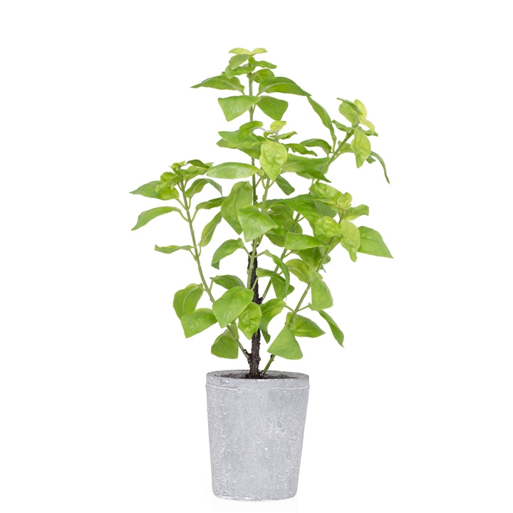 "Potted 16"" H Faux Green Basil Herb Plant"
