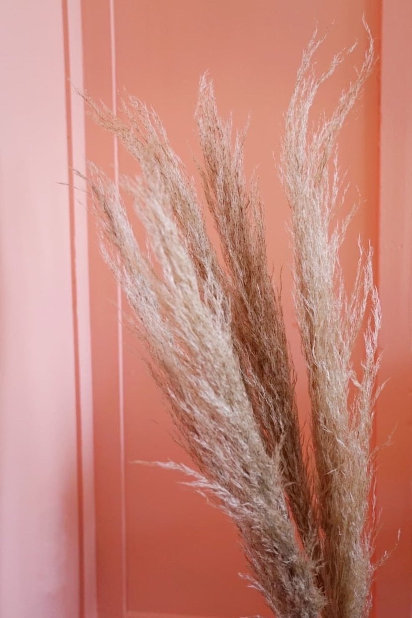 "Large Pampas Grass Stem - 38"" Tall"