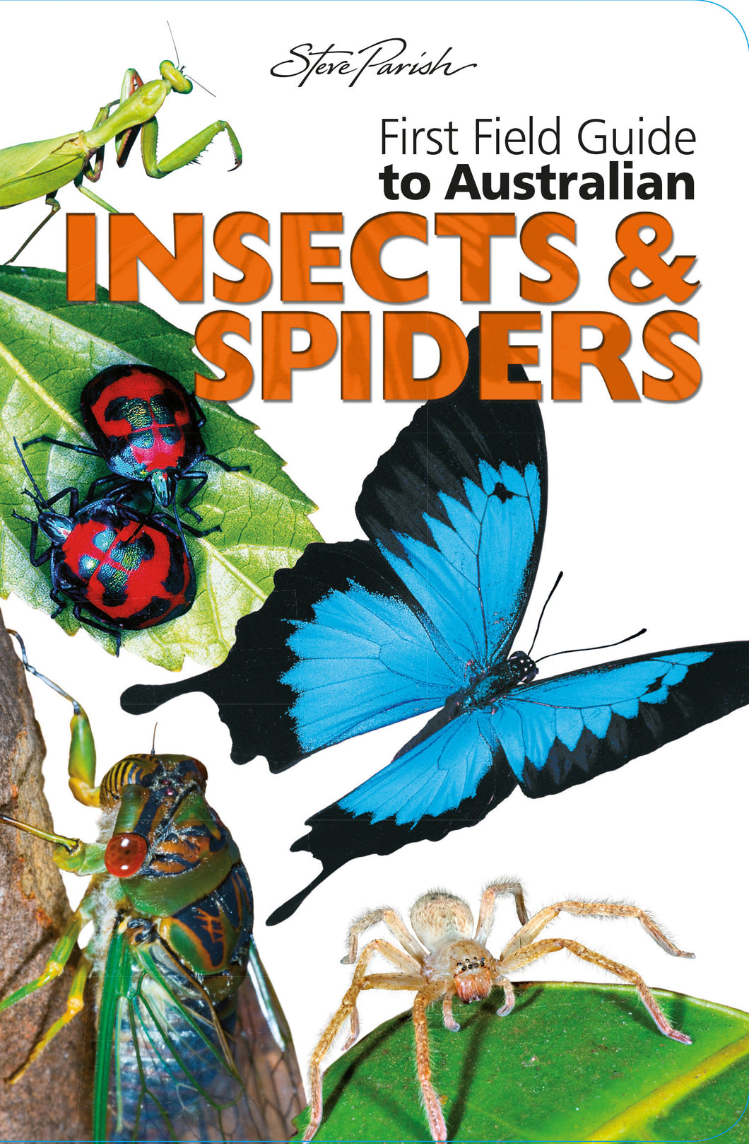 Steve Parish First Field Guides: Australian Insects & Spiders