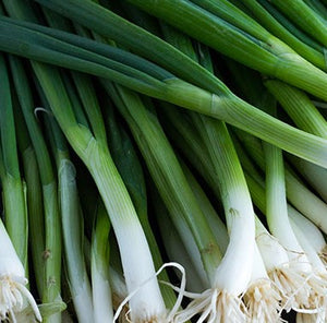 Scallion Parade - Vegetable Plant - 6pk