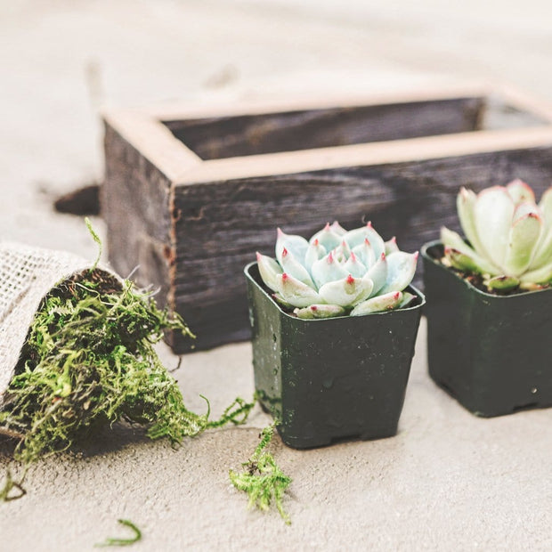 Small Succulent Wood Planter Box - close up 02
