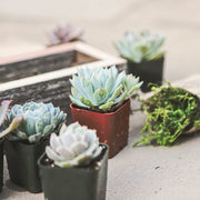 Large Succulent Box Planter Kit Close Up