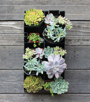 "Confetti Succulent Planter Kit hanging on wall 18""x8.5"""