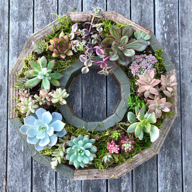 This succulent wreath frame kit provides everything you need for the perfect gift.  The kit comes with succulents, design and care instructions, and redwood decorative frame.  Hang on the wall or use as a table centerpiece for your home decor!